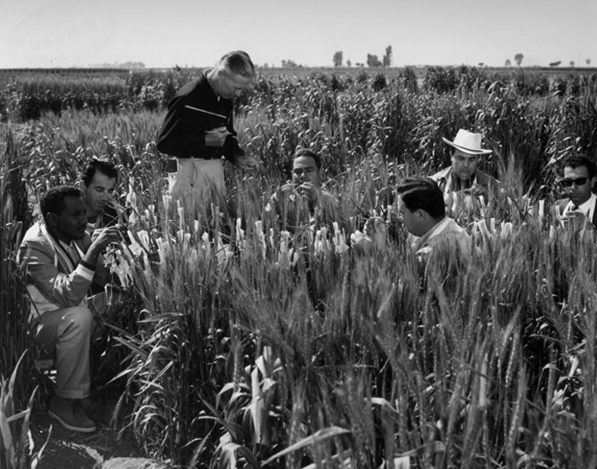 Norman Borlaug instructs FAO students