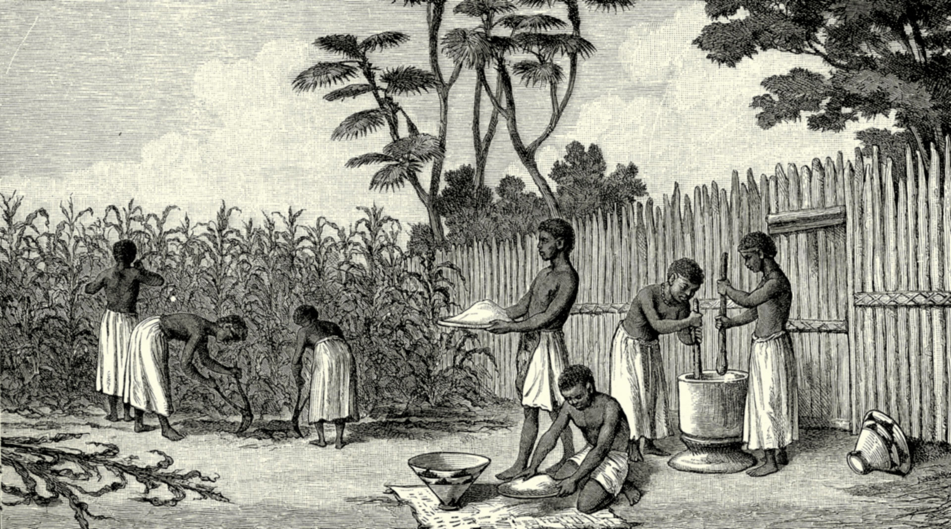 Maize cultivation in Angola